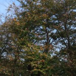 ヴァイオリン教室の近くの秋景色